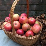 Image for the Tweet beginning: Today is #AppleDay - a