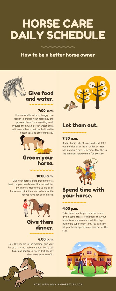 Check out our infographic to find out how you can properly take care of your horse.  🤠 👇 🐴   #HorseshoeTheory #HorseRacing #clintonanderson #arabianhorse #morganhorse #caballosnosonobjetos #caballos #horses #horse #AnimalCrossingNewHorizons #fridaymorning #Texas #western https://t.co/kUwhc6Kf5X