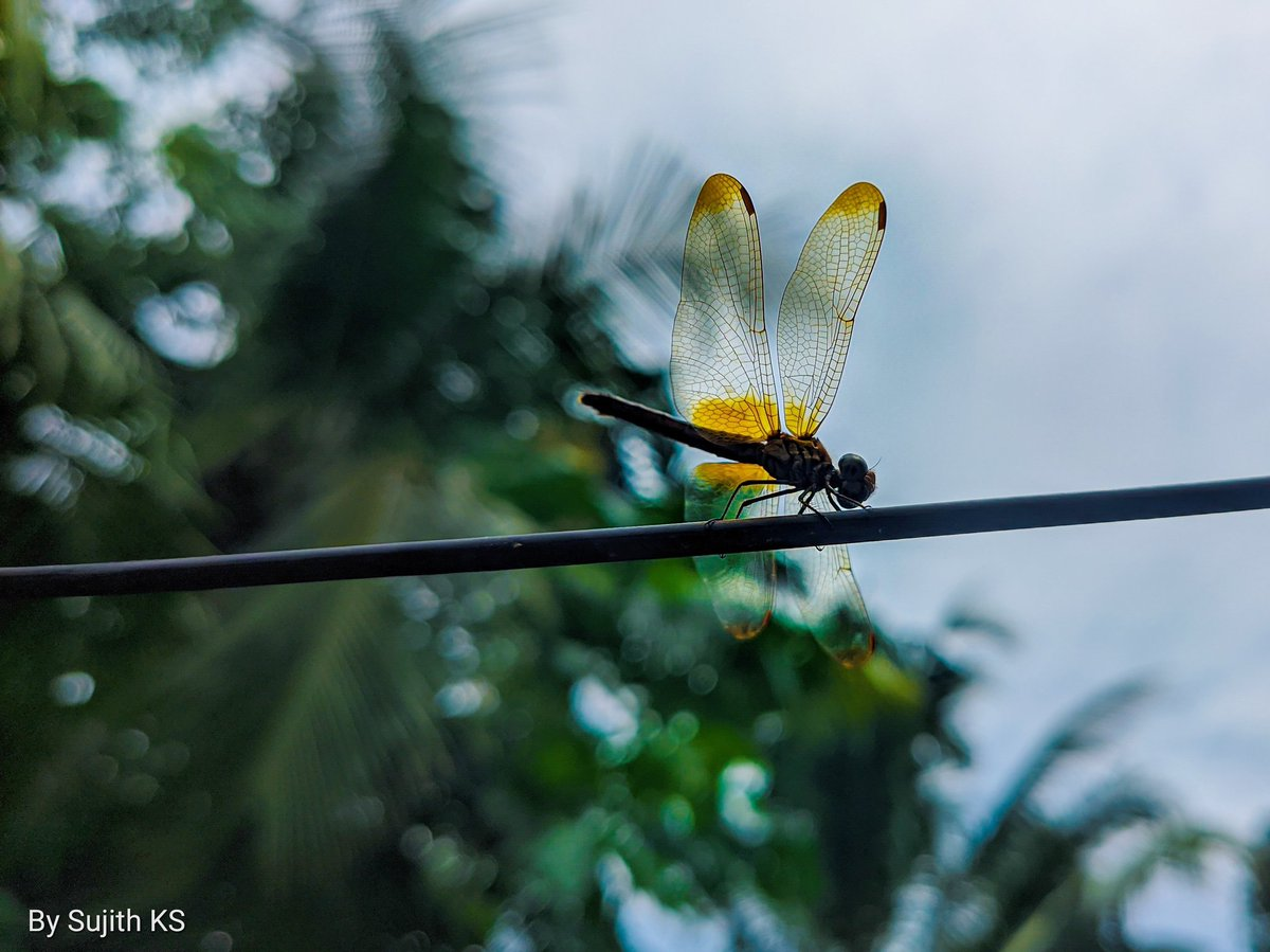 Dragonfly . #SujithClicks #photography #mobilephotography #naturephotography #nature #naturelover #green #greennature https://t.co/0RXMm1pFD9