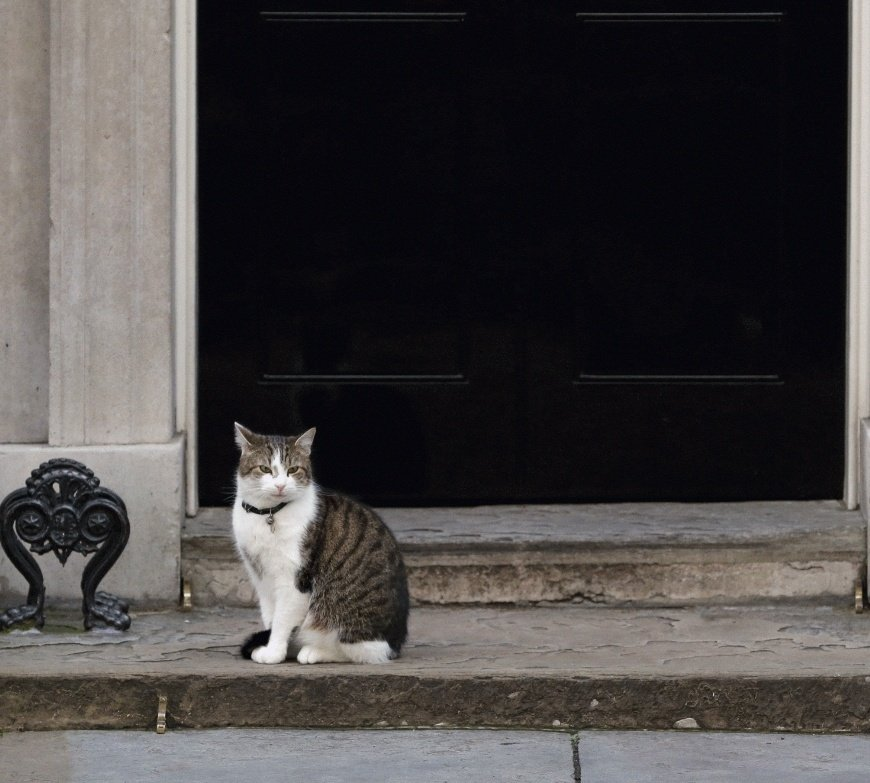 This is your weekly reminder that Larry would be a better PM than Johnson #PMQs