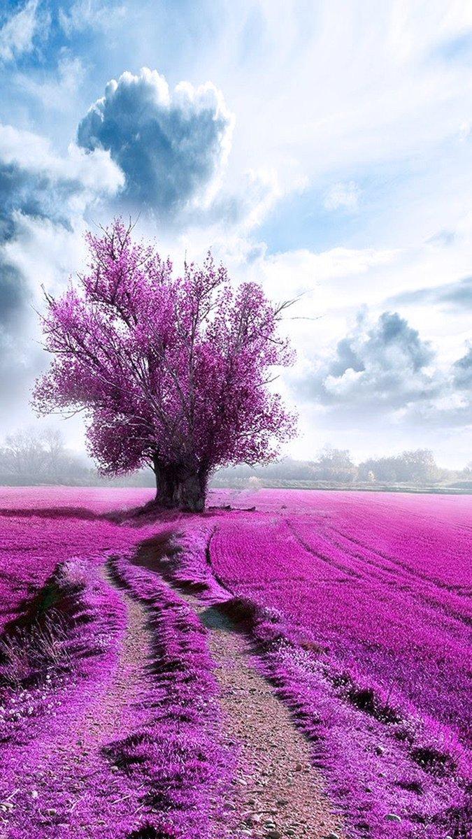 Bonjour chère Rima☕🌻 Je te remercie du fond du cœur pour ta gentillesse et tes vœux, ma chère amie, c'est toujours très agréable de recevoir un bonjour, un message🌺🌸🍁🍂👍 Je te souhaite également une agréable journée de mercredi relaxante et remplie de bonheur et de joie💐🤗 https://t.co/qxxHBZwzYI https://t.co/jzLFVWdMjU