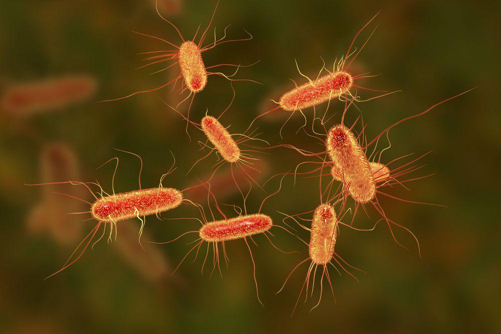 El veneno de avispa🐝 se transforma en un antibiótico para combatir bacterias multirresistentes😮 Así lo afirma José Miguel Cisneros, jefe de servicio de enfermedades infecciosas en el hospital Virgen del Rocío de Sevilla➡️ https://t.co/zQi27MrEH0 Por @el_pais #Ciencia https://t.co/feRs3vhagq