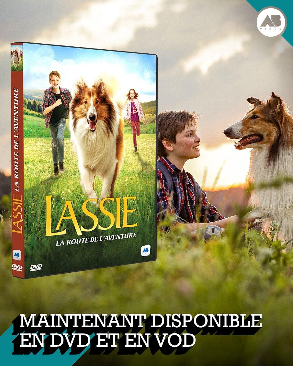 #SORTIEDVD 🐶 LASSIE, LA ROUTE DE L'AVENTURE est maintenant disponible en #VoD !  Ici 👉 https://t.co/c0TPb3F9He Mais aussi en #DVD 👉 https://t.co/wW6eLarNZ7 Un film qui réjouira toute la famille  👨👩👦  #Film #Cinéma #Chien #Famille #Aventure #JourJ #Allemagne https://t.co/acSvHMYySv