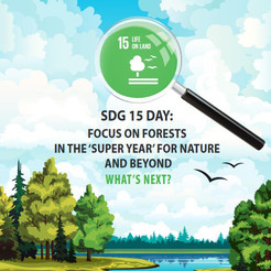 #SDG 15 Day: Focus on forests in the 'super year' for nature and beyond: What's Next?  @UNECE + @FAOForestry host a webinar 2 Nov 2020 to discuss forests and #ClimateAction, #biodiversity, #financing and #partnerships  Register here by October 31 👉 https://t.co/1CQuYhwHQ3 https://t.co/5Qd8SDhtrJ