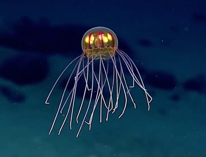"""""""hydrozoan""""  NOAA's Okeanos Explorer discovered this """"alien"""" hydrozoan on the Enigma Seamount near the Mariana Trench at a depth of about 12,000 feet.  👽🤙  #OneWordWednesday  #OWW https://t.co/feCqHxXZxt"""