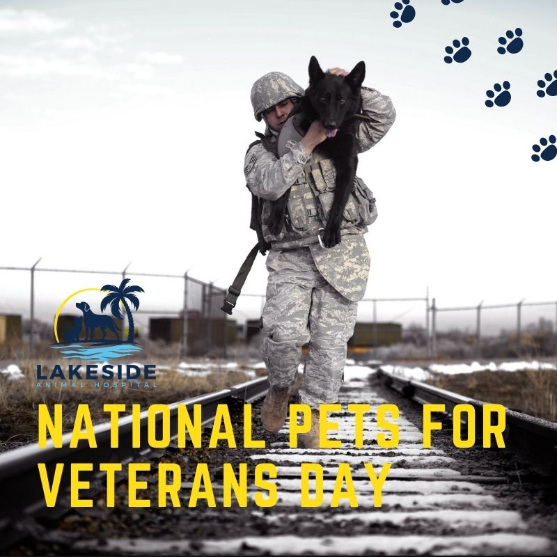 Happy National Pets For Veterans Day! Thank you to all of our courageous #veterans, and to all of the loyal pet companions in the world ♥️. A pet is a vet's best friend 🐕 ! https://t.co/VpBnFd0n56