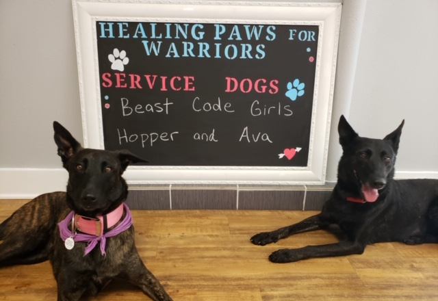 Beast Code is proud to support @officialHP4Ws, which provides service dogs for combat veterans coping with PTSD at no cost to the veteran. Join us in celebrating Ava's graduation on Nov 6, the latest dog Beast Code has sponsored. #HP4Ws #servicedogs #Veterans #CommunitySupport https://t.co/fJWluNtn03