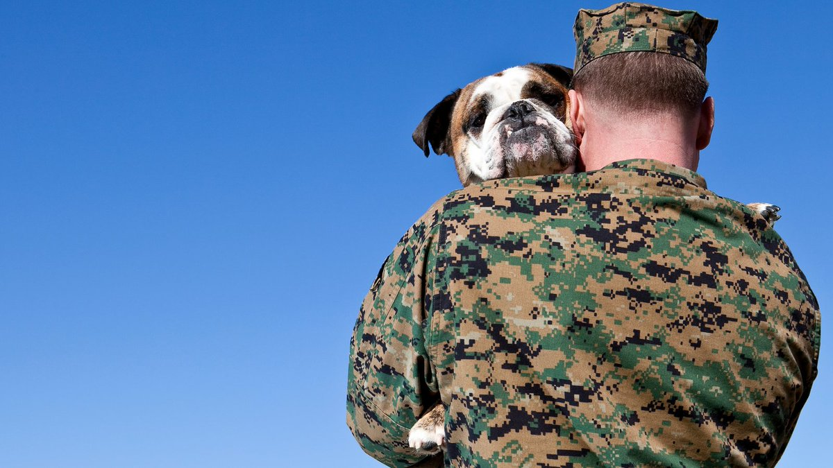 #PetsForVeteransDay started with a dog named Bear, who showed how loving, caring, and loyal pets could be used to help veterans rehabilitate. ❤️😍  Learn how to show your support for veterans here 👇 https://t.co/1AptE9z6bf  #NationalPetsForVeteransDay #ServiceDog #Veterans https://t.co/1Kv93NasYX