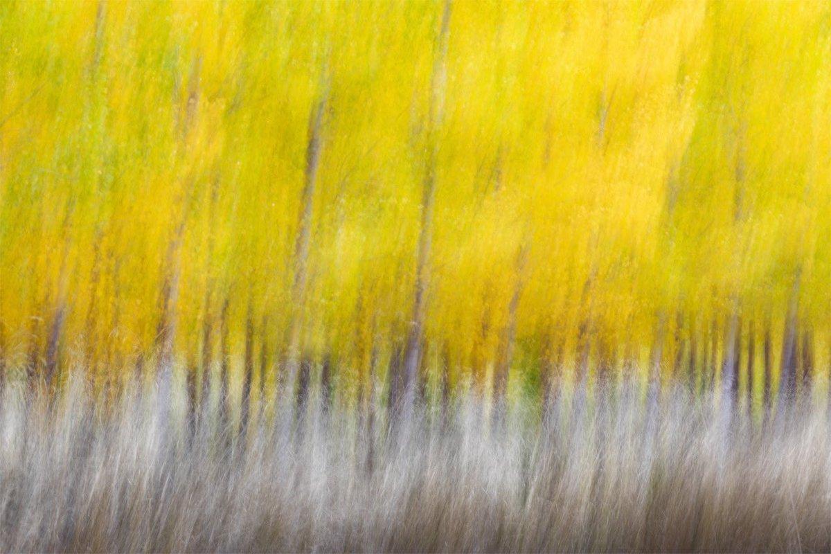 """""""Autumnal Games"""" © 2020 David Frutos Egea Comienza lo mejor del #otoño. Mientras llegan las mejores condiciones, prefiero jugar a ser pintor con mi cámara. @CanonEspana #equipocanon #CanonEspaña #fineart #Autumn #Impressionism #Photography #Fotografia #nature #portfolionatural https://t.co/ueb4enqzha"""