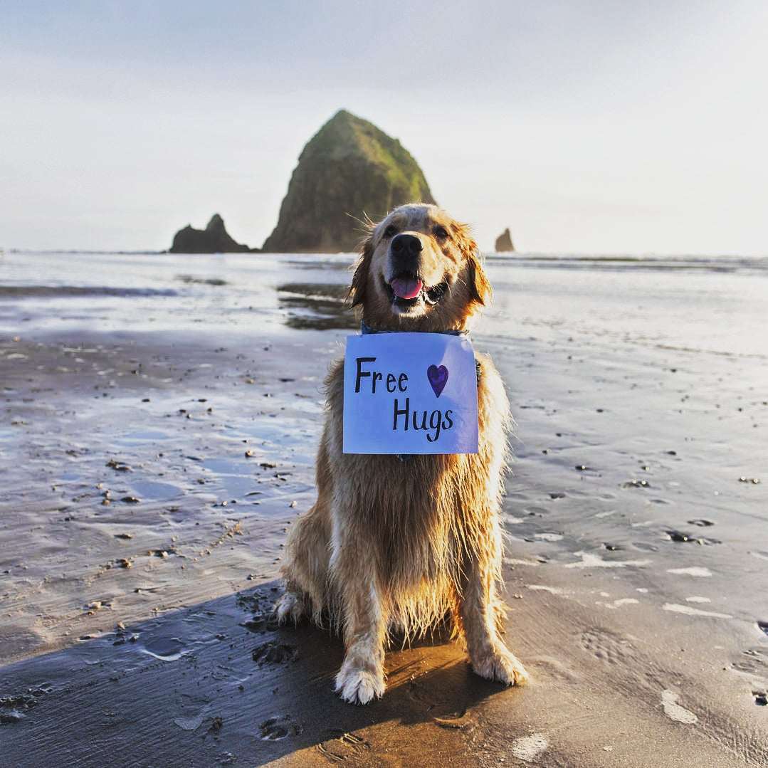 Hump Day! Who needs a hug from this sweet happy dog at the beach. Count me in for hugs! Positive vibes. Follow us... #beauty #positivevibes #seaspalife #oceanview #ocean #nostress #vacation #dreaming #riseandshine #idyllic #weareallinthistogether #dog #happydog  #dreaming #beach https://t.co/Vw3nTh9loK