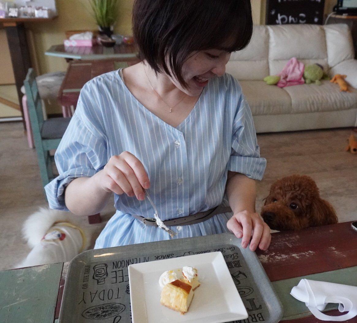 ケーキ食べたい犬🍰🧸 #トイプードル #犬 #toypoodle #dog #youtube始めました https://t.co/gqZt6o8sze