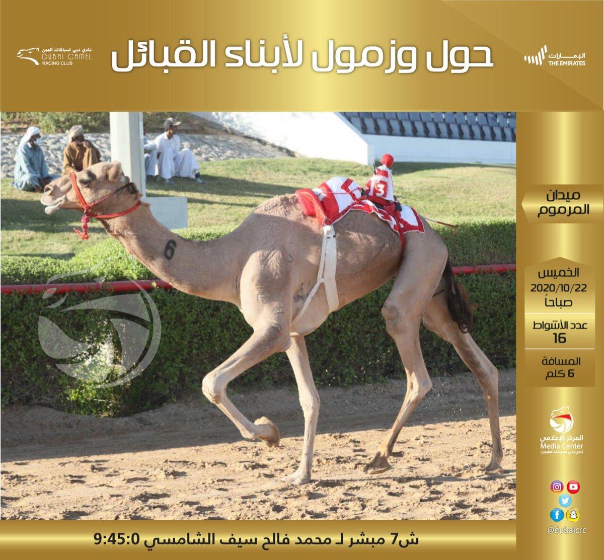 #نادي_دبي_لسباقات_الهجن #المركز_الاعلامي #فزاع #faz3  #almarmoom #Dubaicrc #camel #Racing_club #Dubai #VisitDubai  #uae #Camelrace #sports #fun #camels #heritage #race #tourism #emirates #photography #dubailife #DCRC #mydubai https://t.co/0a5NBBrwoJ