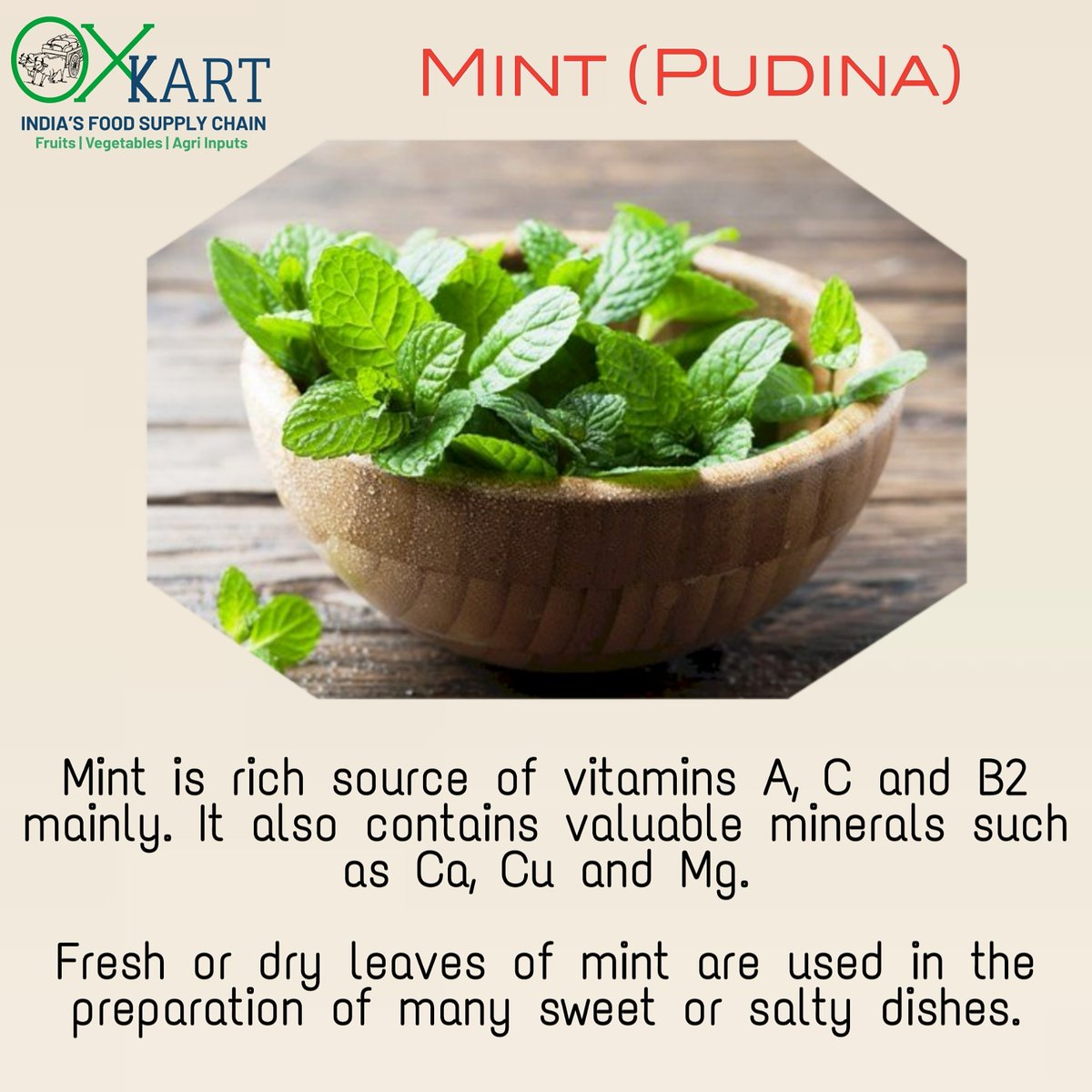 Use of pudina or mint leaves in food is more in summers. Pudina chutney plays a vital role to make our meals tastier.   #mintleaves #mint #india #agribusiness  #startup #oxkart #socialworker #indianfood #bhaktisharma #incubationmaster #youthmaster #startuppathshala https://t.co/6TRMshr5rw
