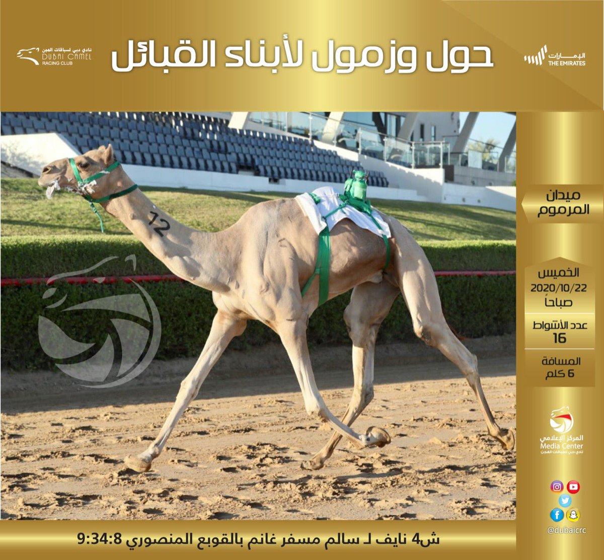 #الاصايل #نادي_دبي_لسباقات_الهجن #المركز_الاعلامي #فزاع #faz3  #almarmoom #Dubaicrc #camel #Racing_club #Dubai #VisitDubai  #uae #Camelrace #sports #fun #camels #heritage #race #tourism #emirates #photography #dubailife #DCRC #mydubai https://t.co/UAN0Z2wb9z