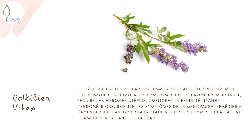 Aujourd'hui dans notre jardin... Le Gattilier soulage les symptômes du syndrome prémenstruel. #femmes #féminin #women #peau #skin #endometriose #santé #healthylifestyle #fibromes #france #bio #naturel #fitnessgirl #paris #suisse #belgique #plantes #phytothérapie #confinement https://t.co/cGB2tI9df6