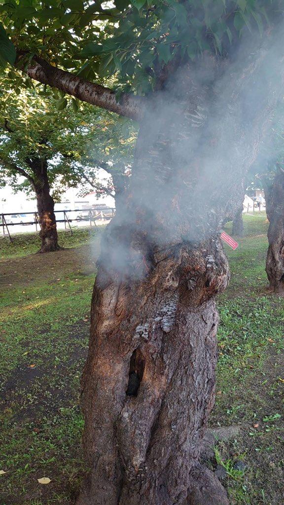 五稜郭公園でボヤがありました。サクラの幹にある穴へ火のついたタバコを捨てた事が原因です。消化後、穴の中を確認したところタバコのフィルターなど多くのゴミが入ってました。穴はしっかり埋めましたが。。。五稜郭公園のサクラは函館市の観光資源であり財産です。絶対にやめてください!