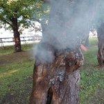 五稜郭公園のサクラの木の幹にたばこを捨てている不届きものがいる・中にはごみがいっぱい入っていた。