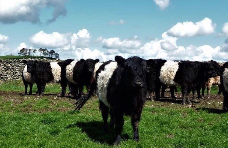 How can you not need Belties when greeted every morning ?