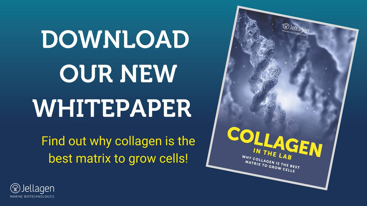 We have launched #whitepaper on #collagen! Download for free by following the link below!   https://t.co/usiRqSnogQ   #cellculture #3dcellculture  #tissueengineering #regenerativemedicine #cells #scientificresearch https://t.co/ZMb5psgEI9
