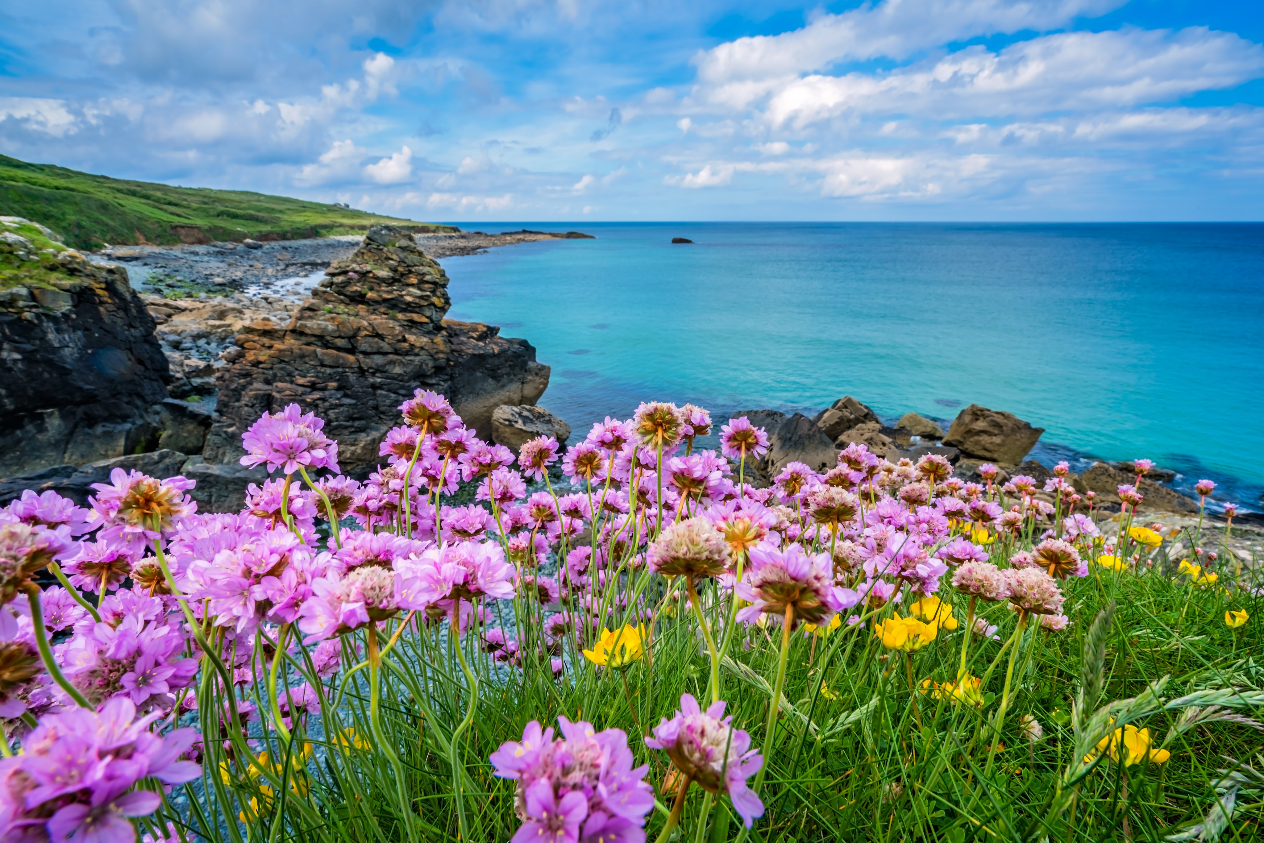 Coastal view with pink flowers in the foreground