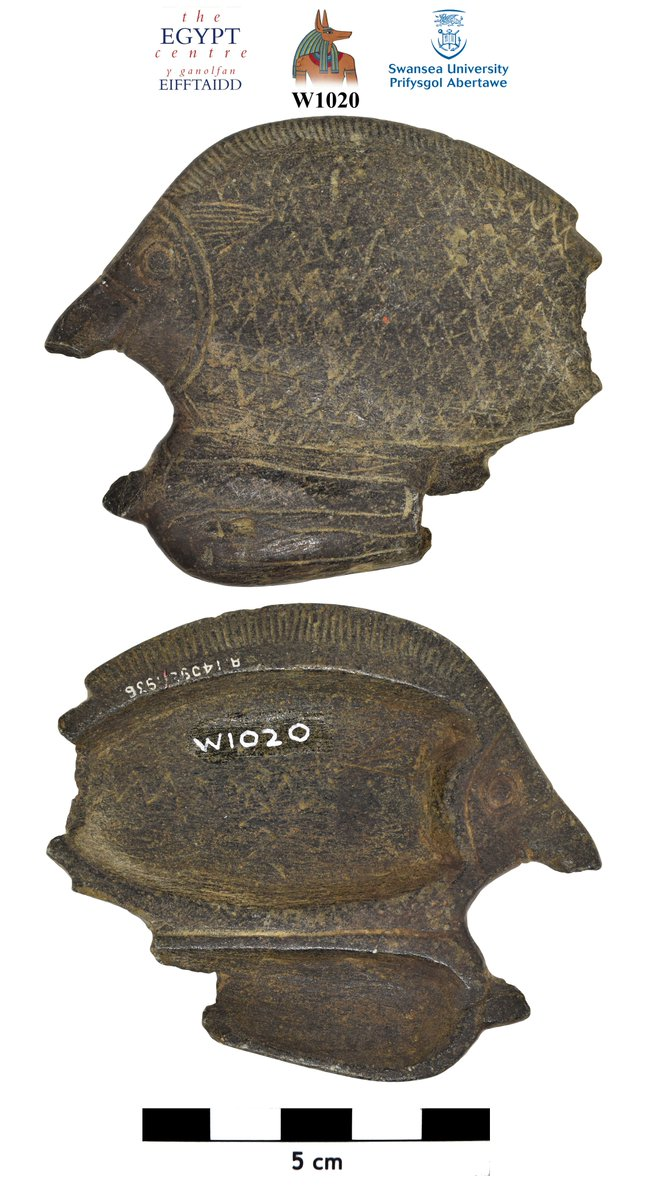 It's always nice when an object in @TheEgyptCentre collection carries a Wellcome number (R14098/1936), which often provides new info. This fish-shaped palette was purchased by Capt. Johnston-Saint, on behalf of Wellcome, from the well-known dealer Nicolas Tano (Cairo) in Feb 1931 https://t.co/vKK5Bxpn1N