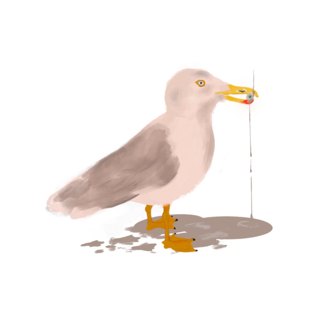 #singersongwriter #songwriter #singer #onemonth #notte #music #newmusic #night #newsong #song #life #love #drawing  #seagull #gaviota #gabbiano #michelangelosetola #instamusic #composer #noche #songwriting #cantautore #cantautor #indie #cantante #thebestisyettocome https://t.co/O3mv59wlKm