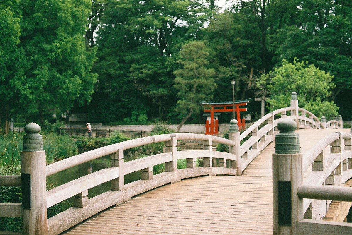 ・Senzokuike Park Nikon Nikomat+Nikkor 50mm F1.4 Fujicolor Superia X-tra 400 #film #filmphotography https://t.co/lnQbAG8iy7