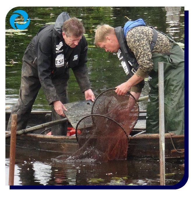 Paling over de dijk zetten? 😳  Ja, dat doen we bij gemaal de Ruijter #VinkeveensePlassen. Nu werken we aan een definitieve oplossing: we maken gemaal de Ruijter visveilig & vispasseerbaar.   💻Webinar - op #wereldvismigratiedag doen we mee tussen 10u-11u  https://t.co/D9niRY8W9X
