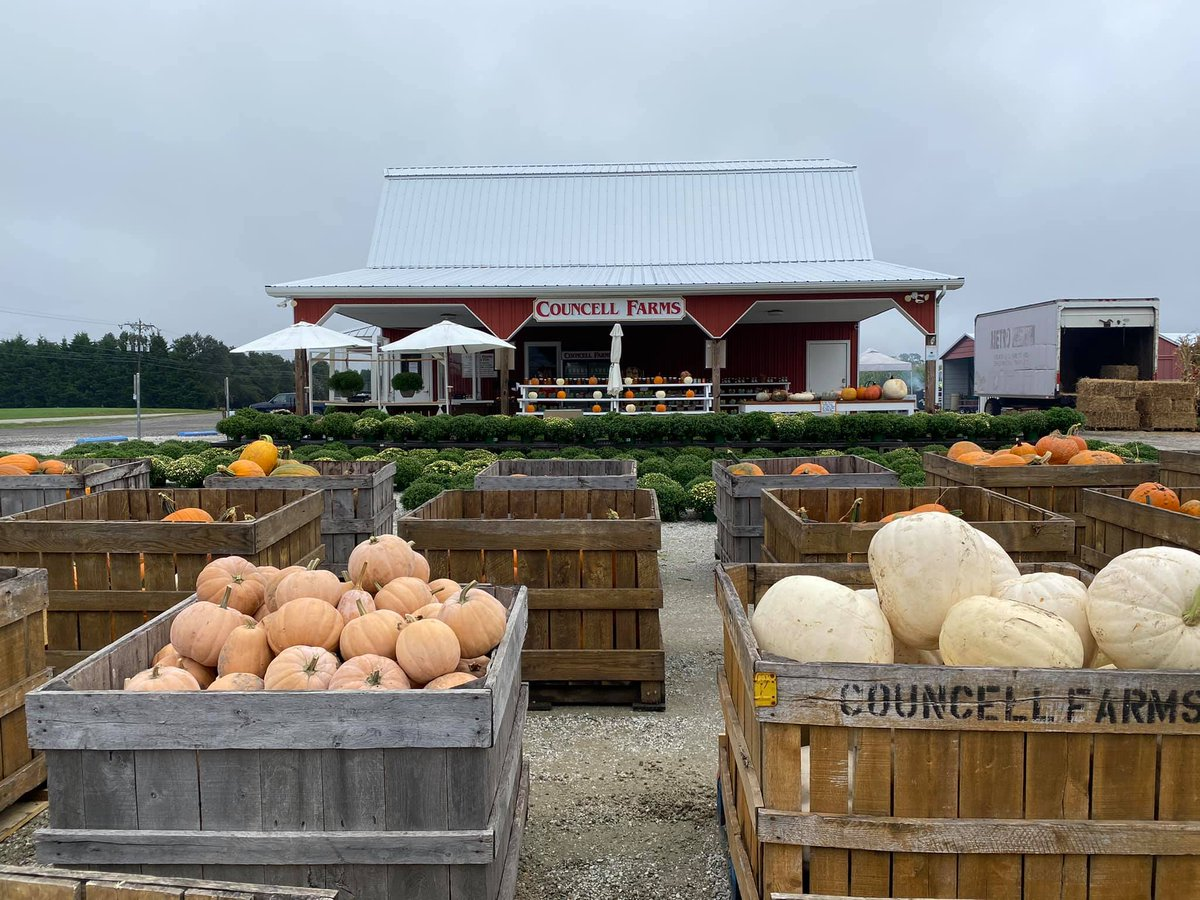 Excessive rain may have prevented the availability of pick your own pumpkin patches, but there's still plenty of farm fresh pumpkins being sold at farmers markets. https://t.co/prKG6GhR83 #MyMdFarmers #MarylandFarms #Pumpkins https://t.co/iKcMLsJ4VM