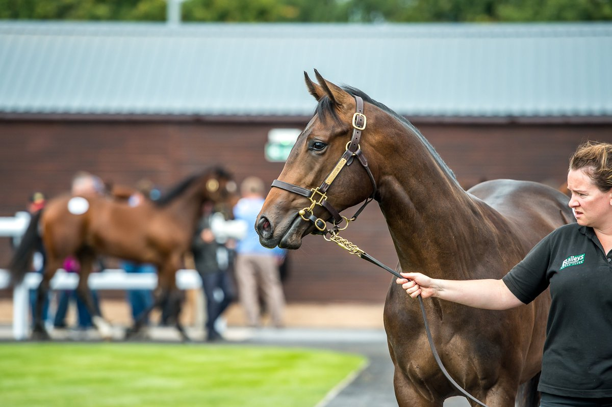 The Doncaster Autumn Sale's horses-in-training session is now complete - we now move onto the Silver Yearling Sale and Autumn Yearling Sale.   Watch the sale live here > https://t.co/c9Ol8etUr7 https://t.co/slx4wrMBLX
