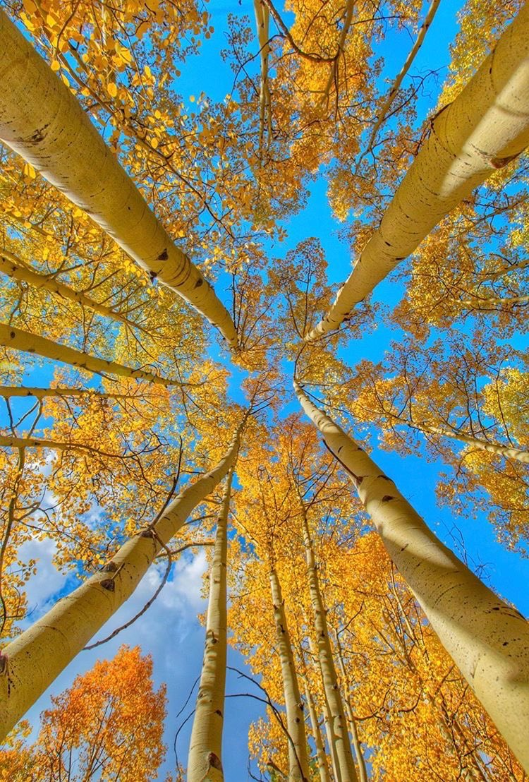 Golden leaves and bluebird skies. ( 📷 : Jordan Curet ) https://t.co/tHSJvrTmno