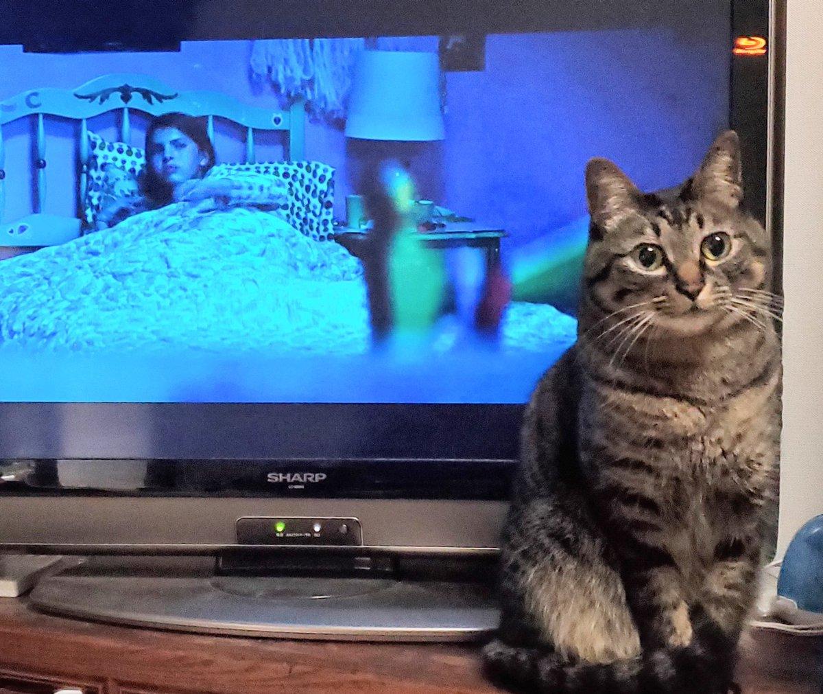 僕はホラー映画大好きなのですが、自宅であまりホラーを観ない理由は、ここぞという場面に限って、ねこがテレビ前に立ちはだかり、くりくりした目で強引に気分をなごませてくるからです