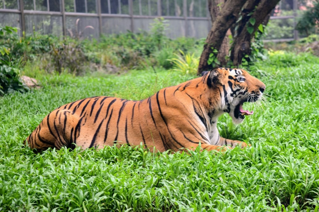 For the second time in a week, a tiger in the #DudhwaTigerReserve has killed a man