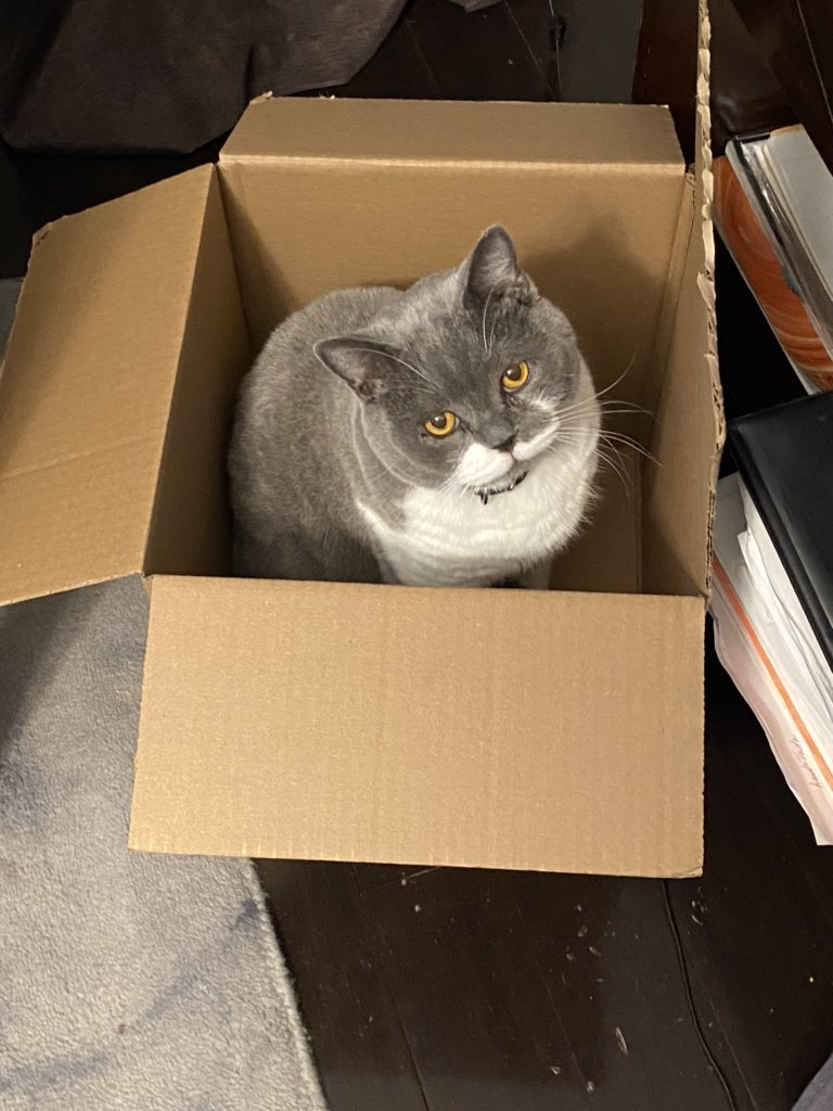 Until the 🦃 is ready I shall be in my box Staff.... Happy #catboxsunday pals #CatsOfTwitter https://t.co/sq1rVP0HDc
