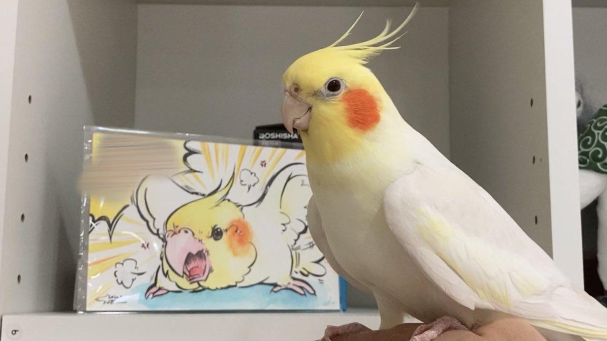 Topics tagged under 可愛動物 on 紀由屋分享坊 EkGUGhRU8AE2mOE