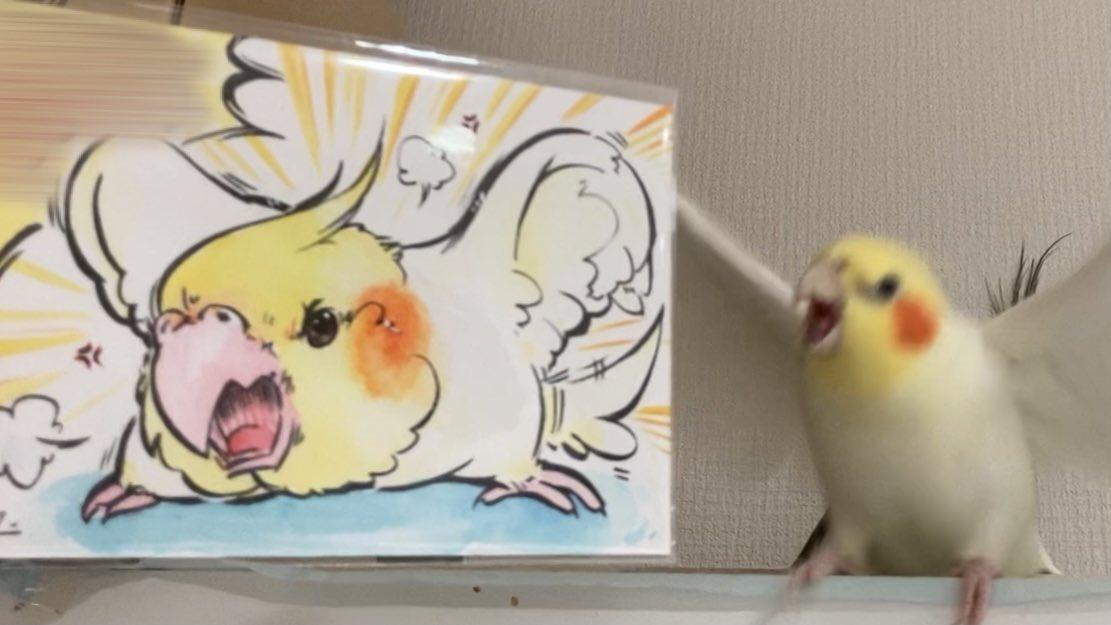 Topics tagged under 可愛動物 on 紀由屋分享坊 EkGUGhXU4AMnDbz