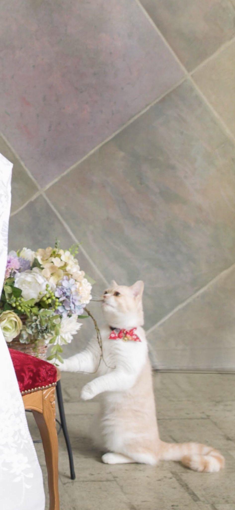 結婚記念写真と猫02