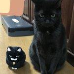 どっちもあまり違和感がなくて可愛い!「猫」と「猫のぬいぐるみ」を顔交換してみると・・・?!