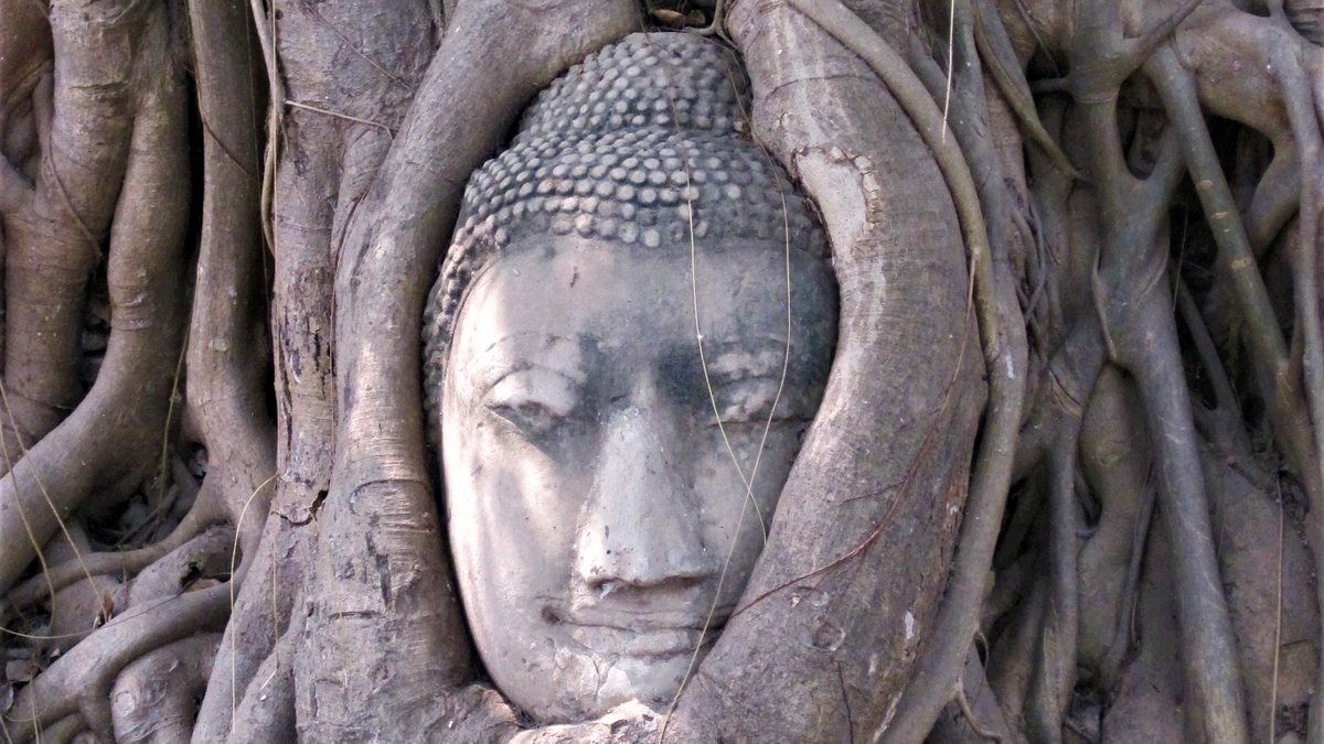 A trip to the ancient city of Ayutthaya makes a great day trip from Bangkok. Cycling is the perfect way to take in the temples and you can hire bikes as you step off the ferry. #Ayutthaya #Bangkok #ThailandTravel #Buddhism #BuddhistTemples https://t.co/xY9TfECHZB
