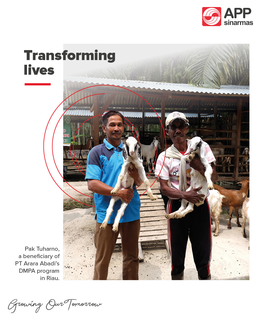 Thanks to the #DMPA program by #AraraAbadi, Pak Tuharno and his farmers' group in Dusun Kesuma, Riau, started with 40 goats and bred them until they now have hundreds of these farm animals, improving the farmers' quality of life. Their spirit and hard work are truly inspiring! https://t.co/M6S7HR0mtW