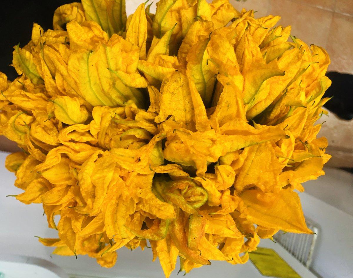 ¡Buen lunes! Nos llegó una Flor de Calabaza hermosa esta mañana... estamos preparando deliciosos omelettes con ella. Ven por uno ó te lo llevamos a casa ó si ya estás trabajando, hasta tu oficina. 5556881082 o 5556057218 o whatsapp 5527243142. Segimos cuidando de tí. https://t.co/lJD6D78PtW
