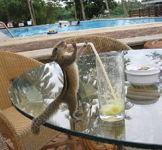 Are you ready to learn new skills to thrive? Look at this squirrel. Do you think she knew how to use a straw? She found a way, because she needed a drink. What will you do, because you need to? #businessgrowth #Motivation