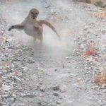 野生動物は本当に危険…。クーガーに遭遇し追いかけられる映像が恐怖!