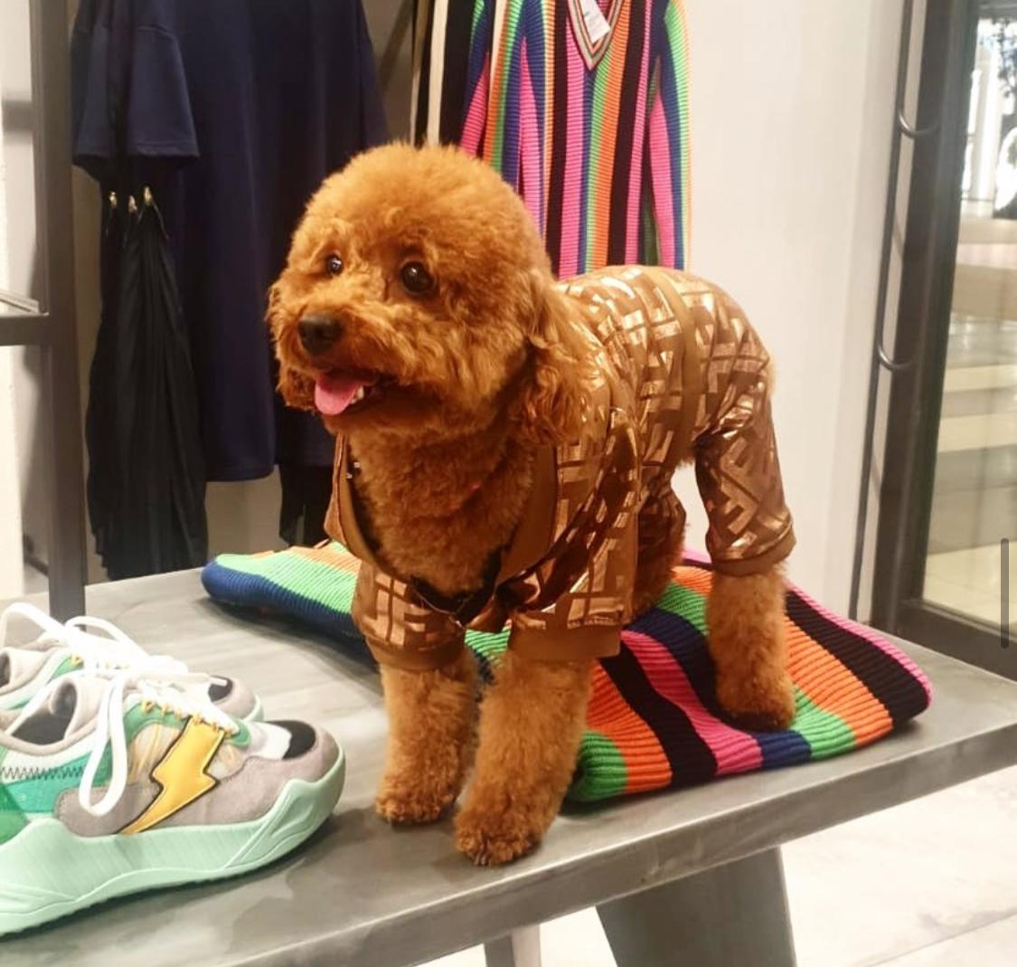 Cutest pajama ever seen😍😍 Lets take a look at +20 More clothes👇 Follow us https://t.co/8sCAVBIEcK #dogsoftwitter #doglove #doglovers #dogs #catlovers #petsupplies #petsofinstagram #thedoggiebag #petboutique #halloweendog #dogapparel #dogclothes #dogtoys https://t.co/ZukcZxNcfF