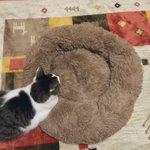 猫用にふわふわのベッドを購入していたが、あまりお気に入り召さなかったのか???
