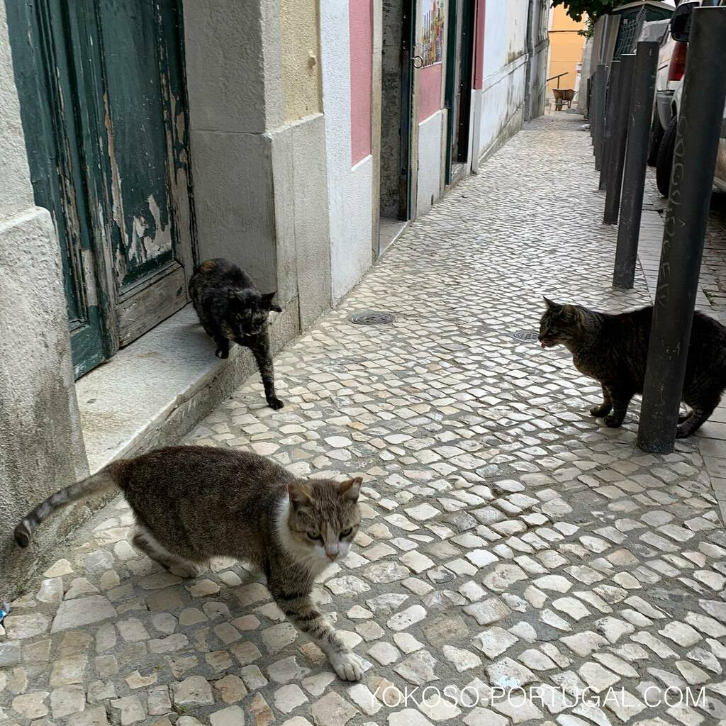 test ツイッターメディア - 朝のミーティング。 #リスボン #ポルトガル #猫 https://t.co/ZTIkQk99oL