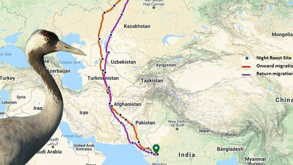 A radio-tagged Common Crane bird's journey from Gujarat to Northern Kazakhstan and back tracked