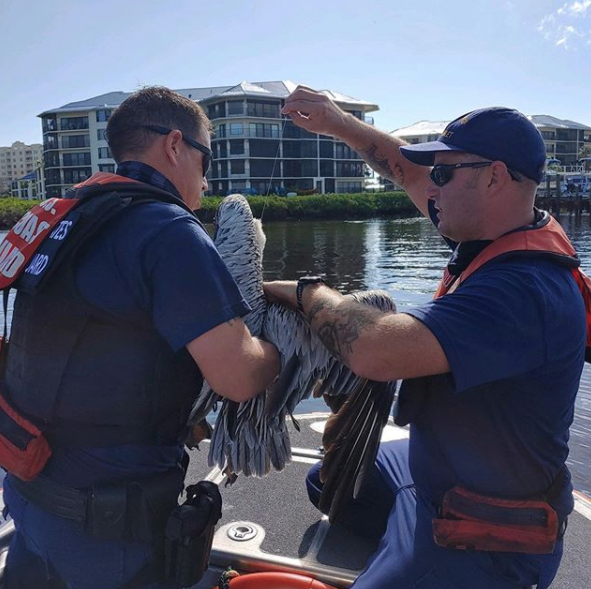 #TravelTuesday brings us to Station Ponce de Leon Inlet, FL. They recently rescued a pelican entangled in fishing line. 🚨 Follow them these week: instagram.com/uscg