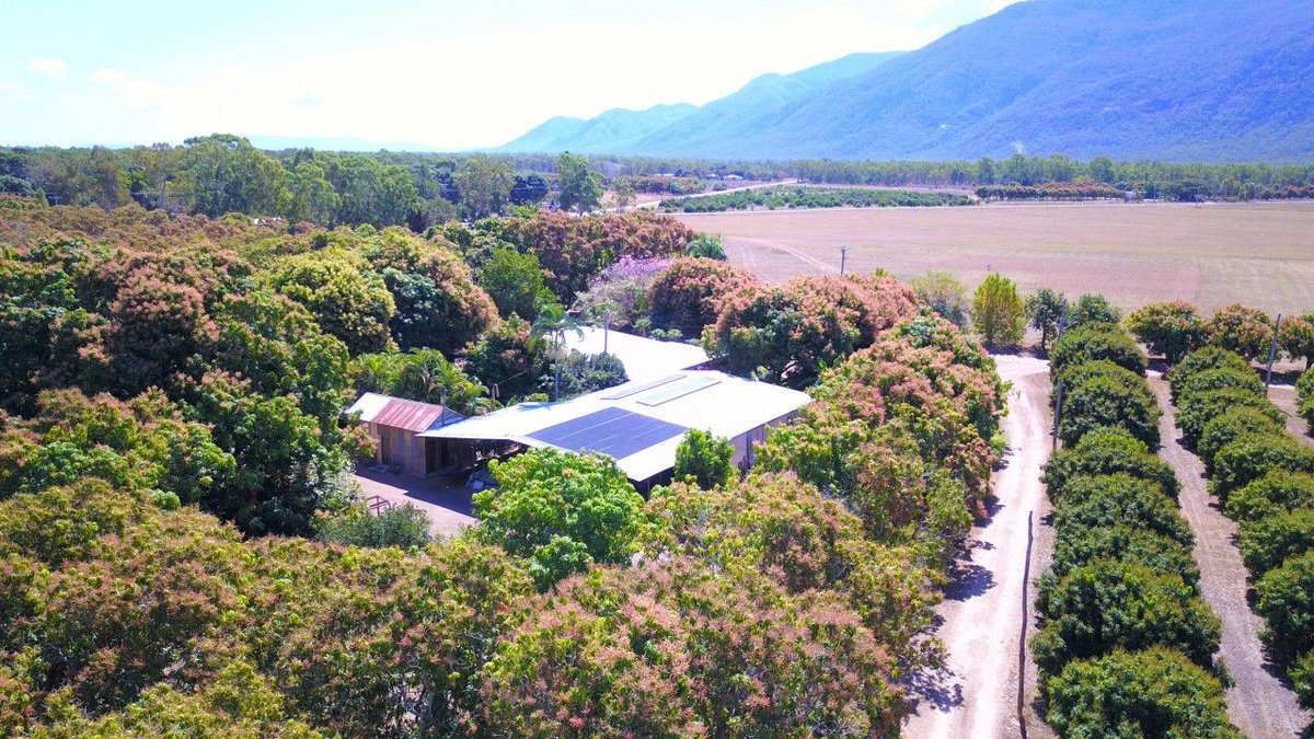For Sale: Majors Creek Homestead and Farm Stay https://t.co/g4TICWom6w  This 16.6 Ha of fertile rural land with orchard, mangos and lychees and an extra- large Homestead is a stand-out property on Majors Creek.  #qld #majorscreek #forsale #farmproperty #realestate https://t.co/K39aZ8zXQ8