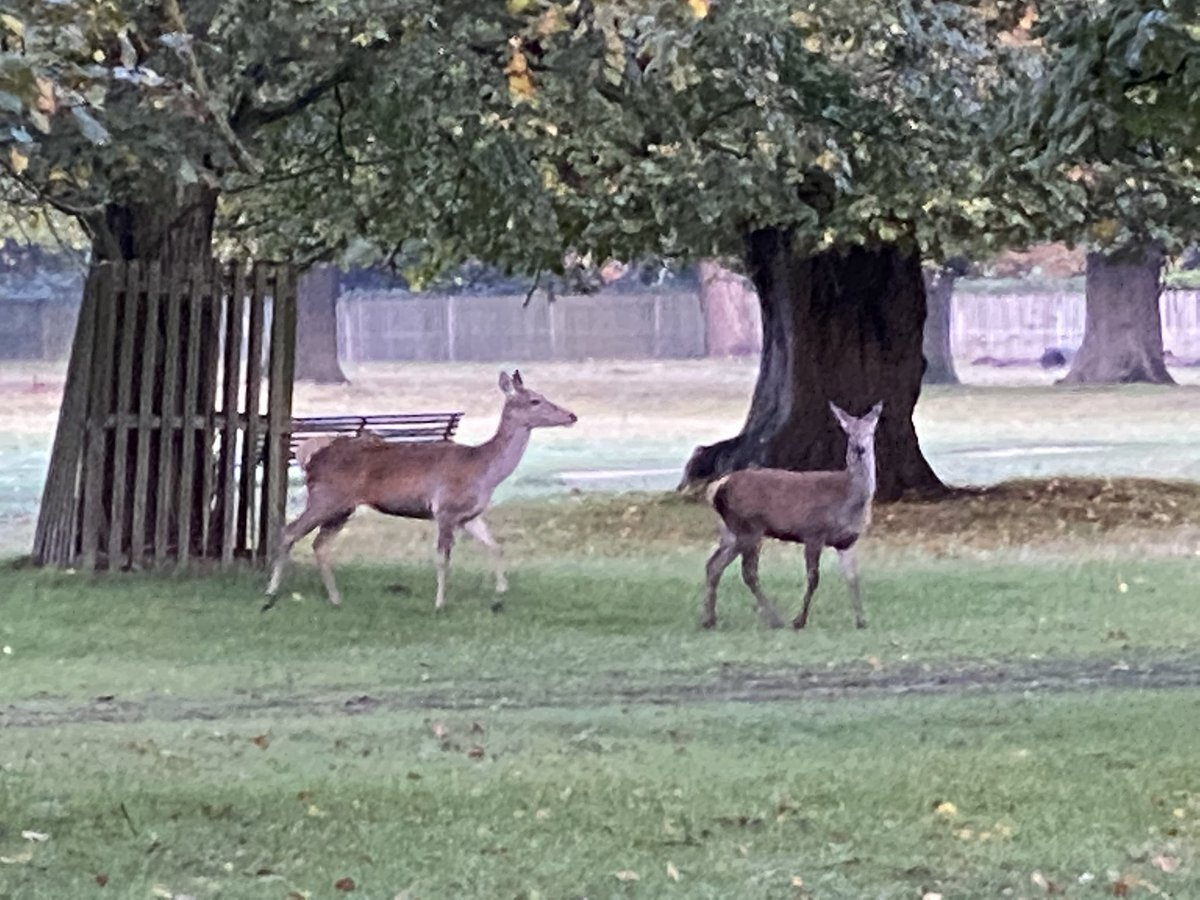 Such beautiful animals (camera zoomed in!) @BBCBreakfast @theroyalparks xxx